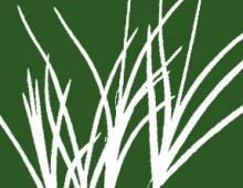 Botanical Society of the British Isles – Grasses of the British Isles